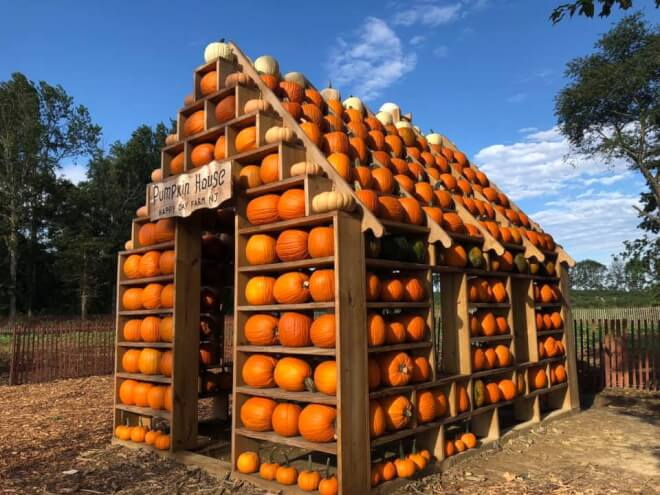 a photo of the pumpkin house at happy day farm in Manalapan