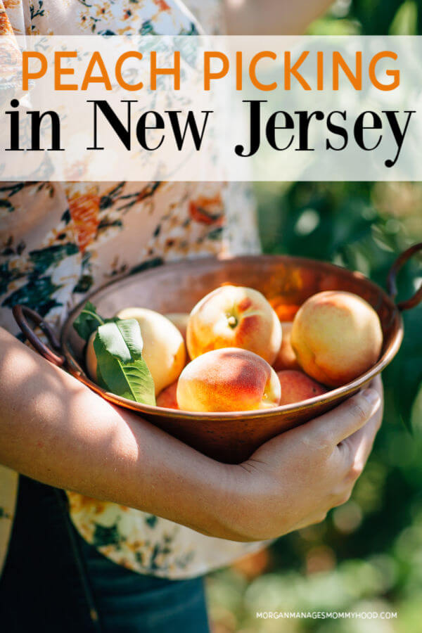 image of a woman in a flowered shirt peach picking in NJ holding a big bowl of fresh peaches.