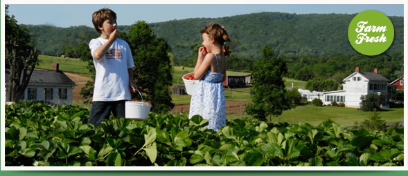 a boy and a girl eating fresh priduct at Phillips Farm with a large farm in the background