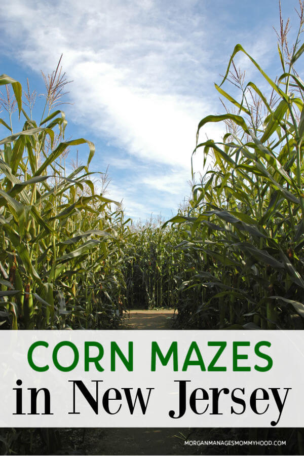an entrance to a corn mazewith text overlay reading corn mazes in new jersey