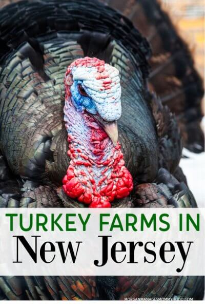 a photo of a turkey at a turkey farm in NJ with text overlay